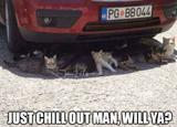 Cats chilling under a car memes