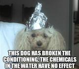 Conspiracy dog funny memes