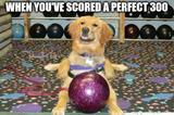 Dog and bowling memes