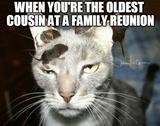 Family reunion funny memes