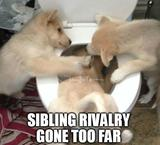 Sibling rivalry gone too far memes