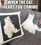 The cat hears you memes